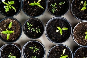 Take a class at the farm is the easiest way to learn about gardening!