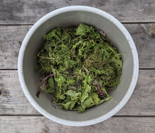 Put all your greens in a dehydrator for the greens powder recipe.