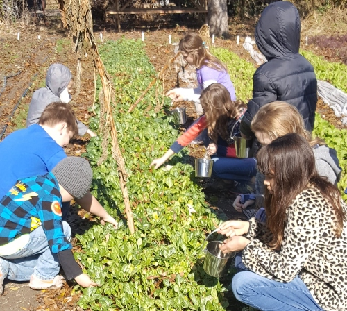 Is Gardening Good For Kids? (Part 2) What the Outdoor Classroom Teaches Them