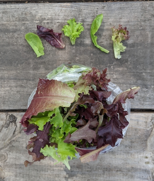 Salad mix is number 9 on the healthiest leafy greens list.