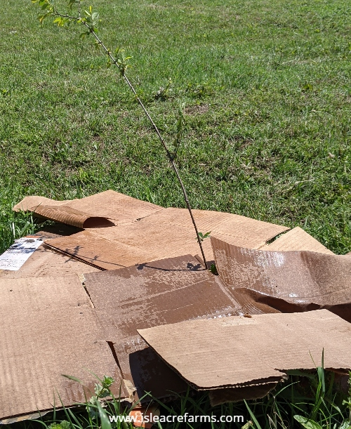 How to use cardboard in your garden: sunblock.