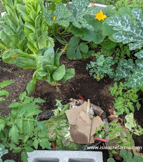 How to use cardboard in your garden: in the compost pile