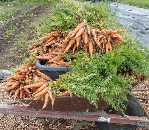 Carrots Good For You? Plus 3 Unique Carrot Recipes